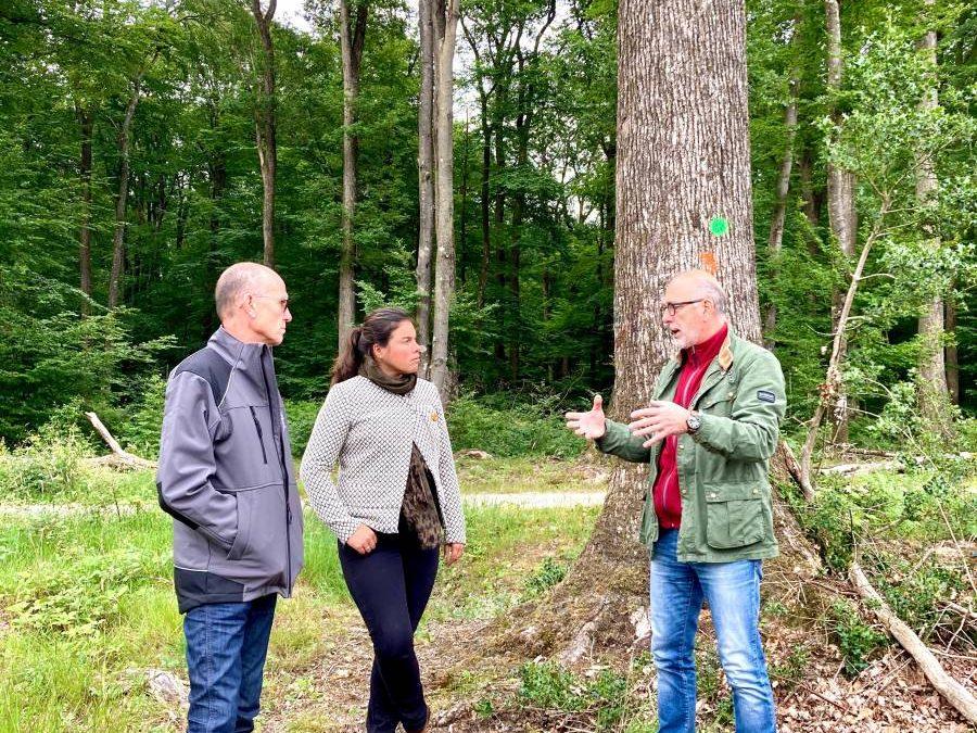 Communiqué de presse : la filière méranderie/tonnellerie rencontre la députée Cattelot chargée d'une mission sur la forêt française